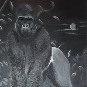 Gorilla bei Nacht